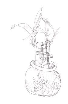 my new plant, in pencil