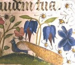 a peacock! from an old manuscript