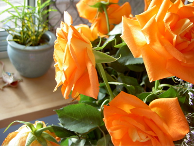 Orange roses on my bedside table and a plant on my windowsill.