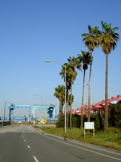 a street lined with palm trees and cranes