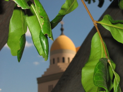 One dome of the Shrine Auditorium, partially hidden by leaves.