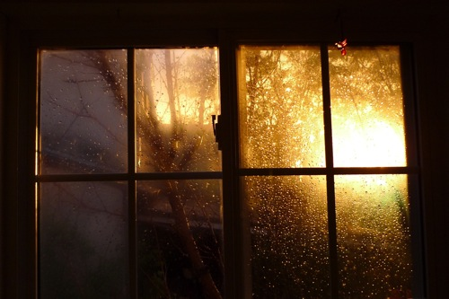 window, tree, rain drops