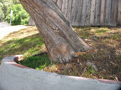 A bent tree, some grass, and a wooden fence.